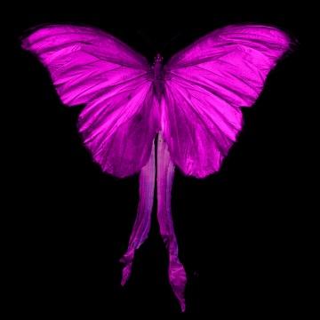 Underwater-Butterfly-Flight-Swarm-0220-small2